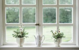 Plants in Window